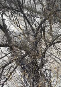 5-ramas de arbol (comparacion)